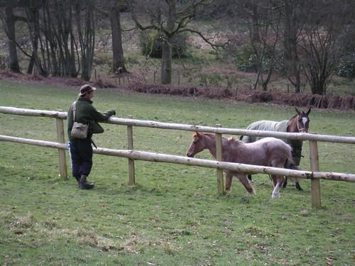 small--ginj-blackwoods-horses