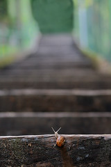 A lot of Stairs to climb (Pierpaolo.) Tags: wood red summer italy macro verde green scale nature colors beautiful closeup landscape evening eyes funny warm europa europe italia estate natural bokeh candid july snail natura depthoffield occhi shellfish curious lumaca rosso colori bergamo lombardia 2009 antenne antennae sera legno arrampicata chiocciola lombardy luglio caldo sfuocato profonditàdicampo supershot canoneos30d mollusco scanzo scanzorosciate montebastia canon7030070300mmisusm