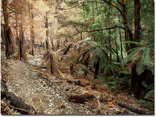 Wet gully survives bushfire