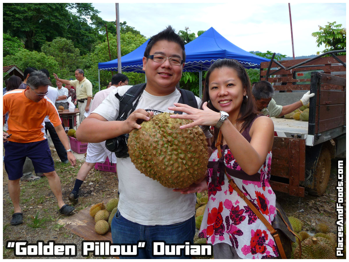 gollden pillow