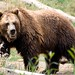 Woodland Park Zoo Seattle 078