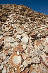 Clamshells (L.Mikonranta) Tags: canon eos scotland clam 1022mm clamshells canonefs1022mmf3545usm skotlanti banffshire 40d canoneos40d copyrightlm