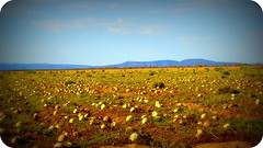 Melon fields forever (vivadixie.) Tags: wild arizona az melons whatev oksoitsamelonfarm