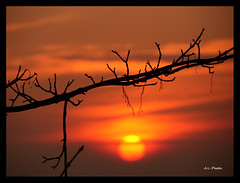 Drop of Gold (Laido) Tags: sunset sun tree silhouette clouds gold branch digitalcameraclub