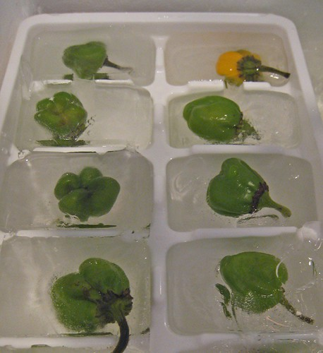 Jabanero Ice Cubes for Hatch-Infused Vodka!
