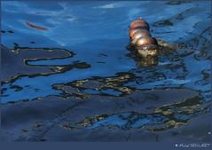 Flottaison (Michel Seguret Thanks for 10,5 M views !!!) Tags: reflejo abstrae abstracción colorada reflection abstracts color abstraction reflex abstrahiert farb abstraktion riflesso astrae astrazione colore reflet abstrait couleur reflexão abstração boat port art water barco puerto arte agua schiff hafen kunst wasser barca porto acqua sete herault languedoc michelseguret diamondstars gününeniyisi thebestofday fun mostbeautifulpictures mbp smörgåsbord sensational bezinning отражение 反思 映像 eau languedocroussillon france photographe flickr pro nikon naturesbest favoritepictures flickrpopularphotographer worldtrekker excelenceofphotographeraward mostbeautifulpicture mbpictures thisphotorocks overtheshot artiste artist