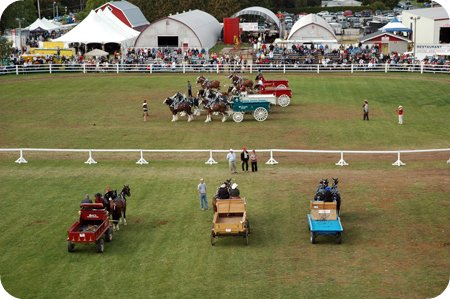 Horsey stuff at the Carp Fair
