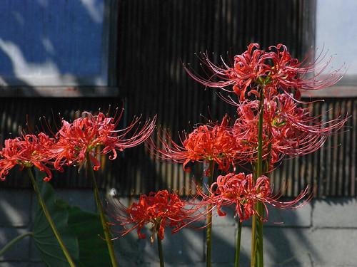 Flower-059