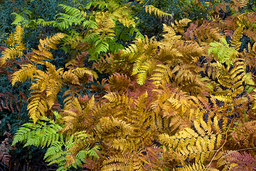 fall ferns 4