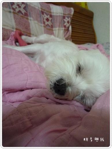 睡的好熟丫