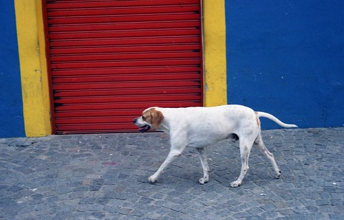 Dog in El Caminito