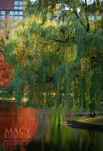 Public Garden Swan Boat Pond