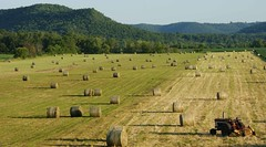 Second Cutting (jimehle58) Tags: agriculture hayfield roundbales roundhaybales tractorinfield secondcuttinghayfield minnesotahayfield orgainchayfield