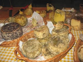 pecorino_sheep_cheese_puglia