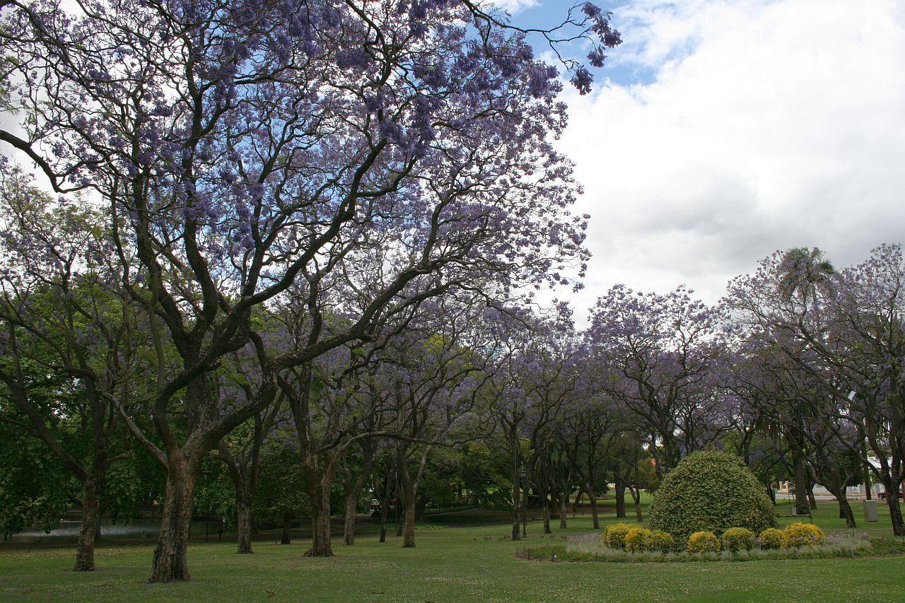 hyde park purple