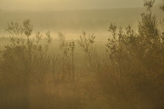 mist (petelovespurple) Tags: park morning tag3 taggedout early nikon tag2 tag1 clumber notts d90 sooc straightoutofcamera