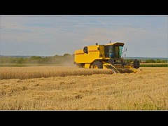 Le temps des moissons (7) (BrunoDelzant) Tags: yellow jaune wheat machine straw agriculture paille moisson bl combineharvester machineagricole moissonneusebatteuse