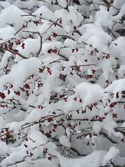 Snow in December