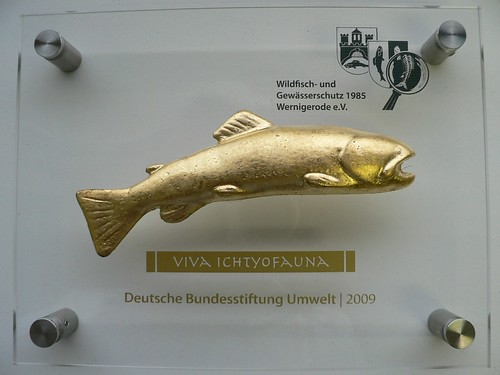 Wildfisch-Preis