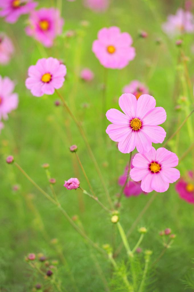 看看花草.夏天來了~