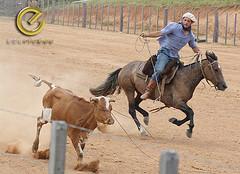 IMG_6159 (Edu Rickes) Tags: brazil horses brasil caballos rodeo cavalos rs riograndedosul gaúchos gaúchas beautifulshots piratini gineteada canon450d brazilianphotographers fotógrafosbrasileiros tirodelaço todososdireitosreservados fotógrafosgaúchos culturagaúcha edurickes belasimagens rodeiogaucho edurickesproduçõesfotográficas canonrebeldigitaleosxsi copyright©2010 fotografiaslegais