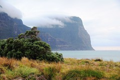 Dec09LHI 017 (rbrophy) Tags: lordhoweisland