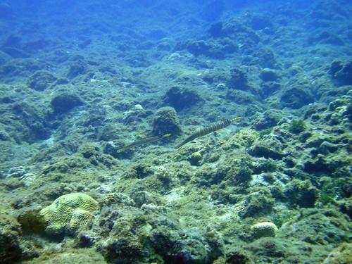 2010年小琉球體檢結果顯示此區珊瑚礁嚴重裂化,底質多被藻類覆蓋,活珊瑚覆蓋率低於10%,區內其他生物如魚類也被捕撈殆盡。
