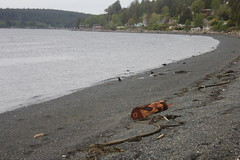 Rocky beach (lionsgater) Tags: bc sointula