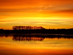 Dawn skies and reflections. (algo) Tags: uk england water sunrise reflections dark gold dawn interestingness topf50 searchthebest topv1111 topv999 topv444 ducks explore algo topf100 100f lookeast tringreservoirs 50f explore6 holidaysvacanzeurlaub searchthebestnew