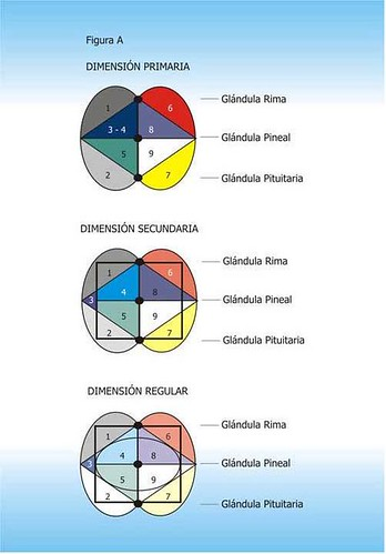 Zonas cerebro-dimensiones