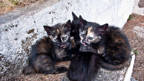 French kittens just been fed.