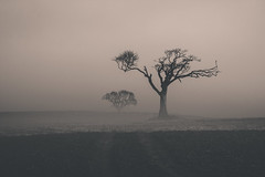 Dreich (ColinParte) Tags: sun mist tree field weather fog mud farming bangor muck gnarled dreich flickrexplore northdown canon60d