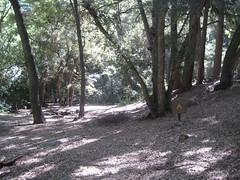 Devore Campground.jpg (Mount Wilson, California, United States) Photo