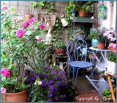Outdoor room  with pot rose in bloom (Boxwoodcottage) Tags: summer garden outdoor space patio deck boxwoodcottage