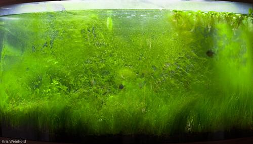 54G - Uh Oh, Algae!