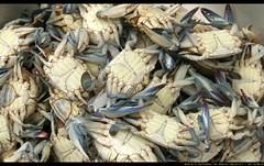 Salvador de Bahía - Brazil (154) (Doctor Canon) Tags: blue brazil brasil america samba market crab viajes bahia salvador seafood trips marisco mercadillo cangrejos azules salvadordebahia jlmera