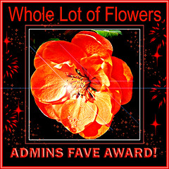 Whole Lot of Flowers Admin Choice award