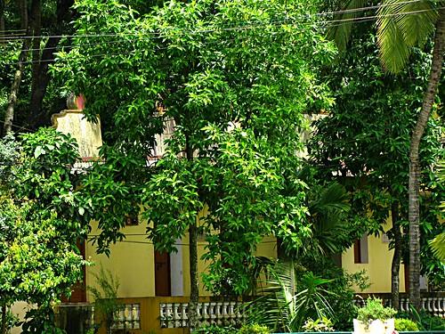 Kula Purush Temples Ramnathi