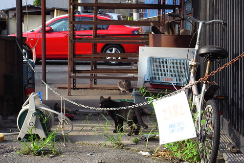 Today's Cat@20090913