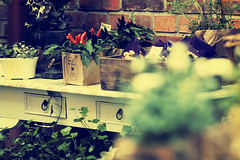Malmo - In a vintage garden (Manlio Castagna) Tags: flower green yellow canon vintage sweden retro boquet malmo 400d manolio flowerist manliok