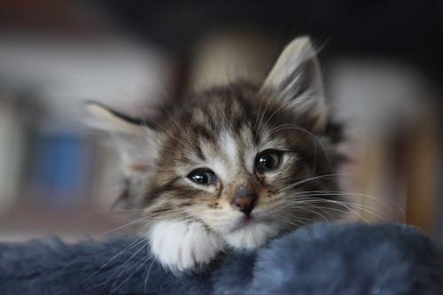 フリー画像| 動物写真| 哺乳類| ネコ科| 猫/ネコ| 子猫|      フリー素材|