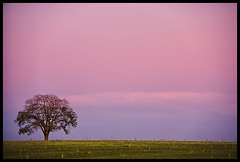 My fav lone tree (YYZDez) Tags: sunset ontario canada tree field canon5d goldenhour lonetree markham yorkregion canonef70200f4isl artofimages