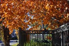 hey, it's fall already (jody9) Tags: fall hollywood utata griffithpark thursdaywalk utata:project=tw182