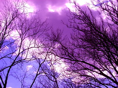 Purple Haze (robertvena) Tags: pictures trees sky music art robert rock metal clouds print photography photo frames lyrics haze artwork artist photographer purple photos guitar pics framed hard picture pic rob photographs photograph frame hero prints roll hendrix title tunes heavy jimi songs vena titles