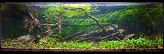 Andy Mack Aquascape @ The Green Machine (Stu Worrall Photography) Tags: green andy nature aquarium ada stu cardinal machine angels slate mack aquascape the tetras worrall tgm altum stuworrall ukaps ukapsorg