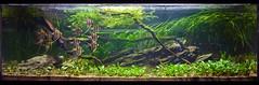 Andy Mack Aquascape @ The Green Machine (Stu Worrall Photography) Tags: green andy nature aquarium ada stu cardinal machine angels slate mack aquascape the tetras worrall tgm altum stuworrall ukaps ukapsorg