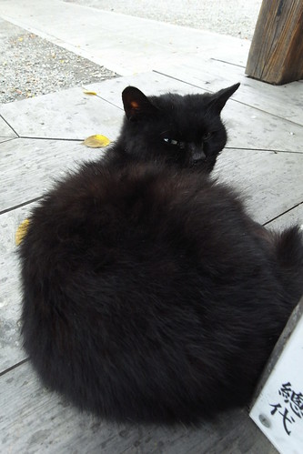 Today's Cat@20091113
