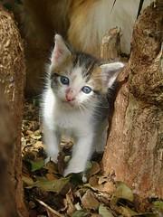 (analcg) Tags: cats white cute cat gatos gato felinos felino filhote gatobranco catmoments