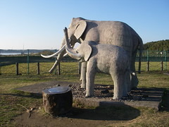 印旛のなうまん象