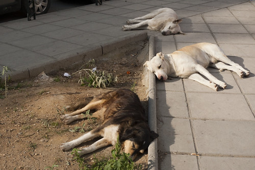 3 Sleeping Dogs & Curb